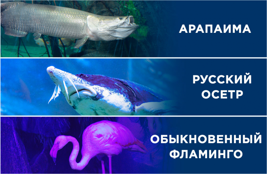 Дельфинарии и океонариумы в москве