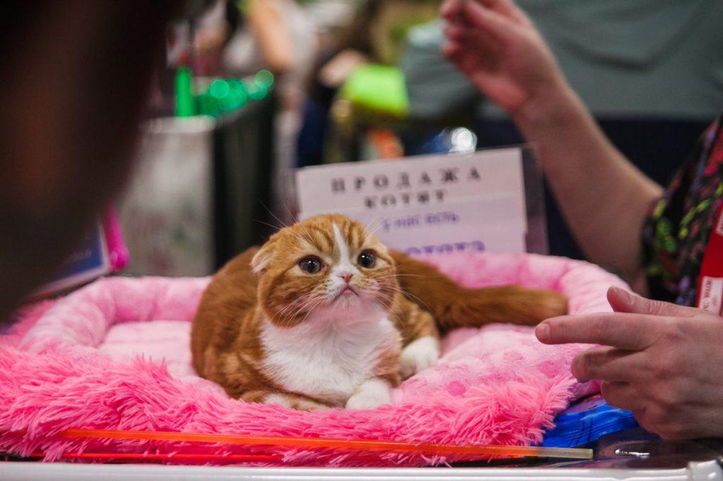 Выставки кошек в 2018 году