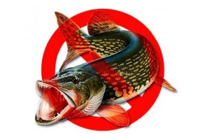 Запрет на рыбную ловлю в 2019 году в России | в Московской области, почему запретили