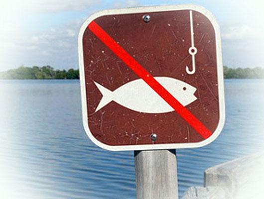 Сроки запрета на рыбалку в 2019 году фото