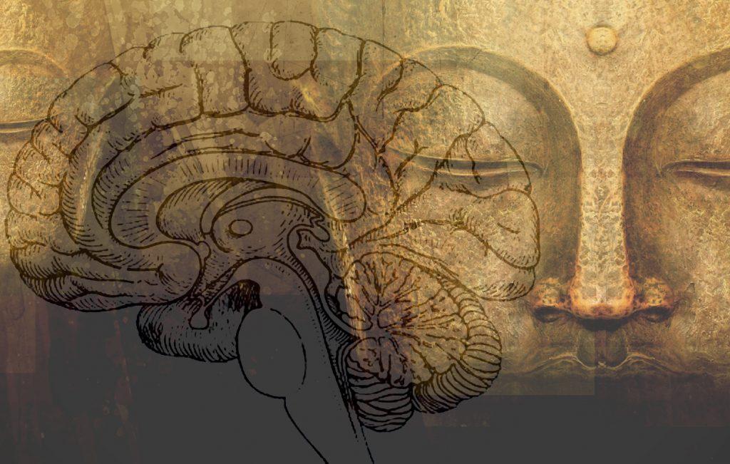 картинка йога мозга если